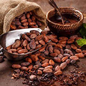 giá cacao